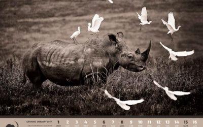 Amani Calendar
