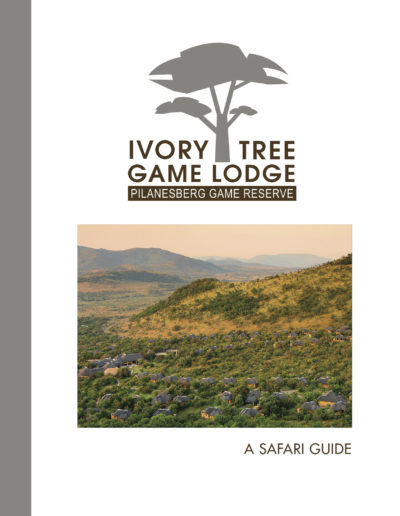 Ivory-tree-cover-SENT-hres