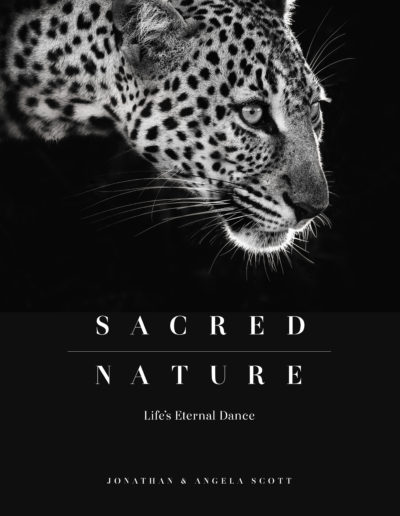 Sacred Nature Cover
